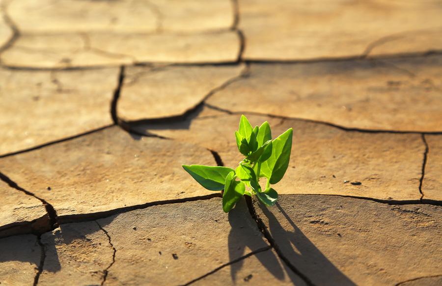 Agricultura ecológica: +rentable+eficiente