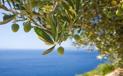 Aceite de oliva contra el cambio climático