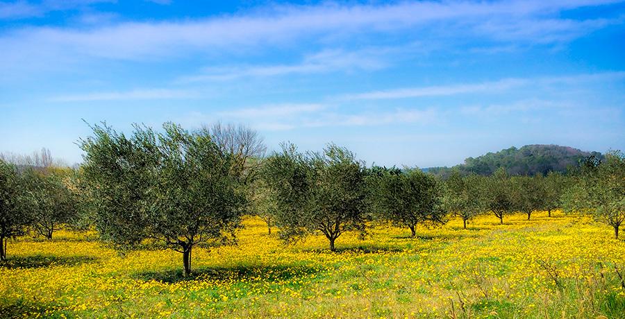 Energías renovables en zonas rurales: una solución verde para Castilla-La Mancha