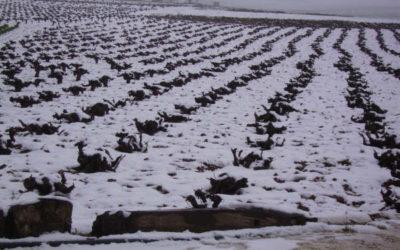 Febrero en Castilla-La Mancha tras Filomena
